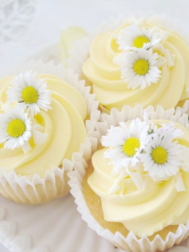 CutestFood_com_daisies_are_like_sunshine-390x520